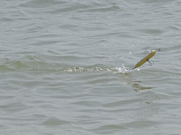 leurre-de-surface-en-mer