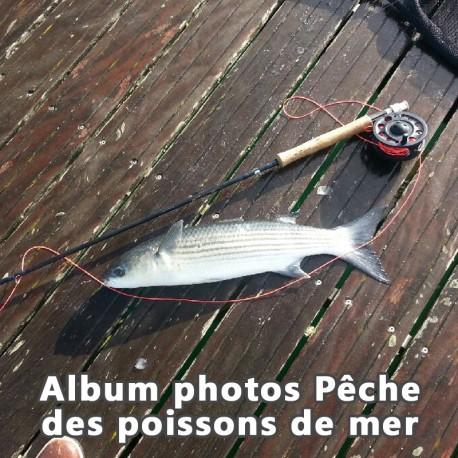 Album Photos Pêche aux poissons de mer