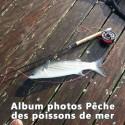 Album Photos Pêche des poissons de mer
