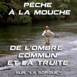 """Pêche à la mouche de l'ombre commun et la truite sur """"La Sorgue"""""""
